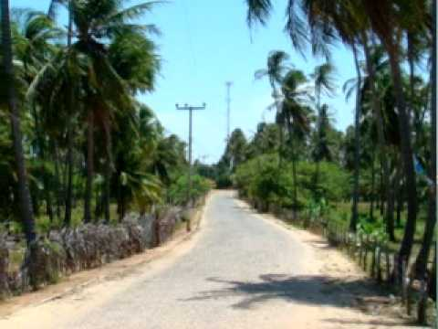 Coconut Grove Brazil ! The Land and surrounding area