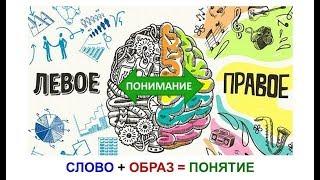 """Схема из книги Б.И. Вершинина: """"Мозг и обучение"""""""