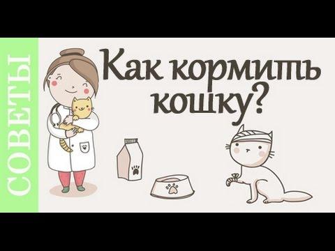 Как кормить кошку. Советы ветеринара