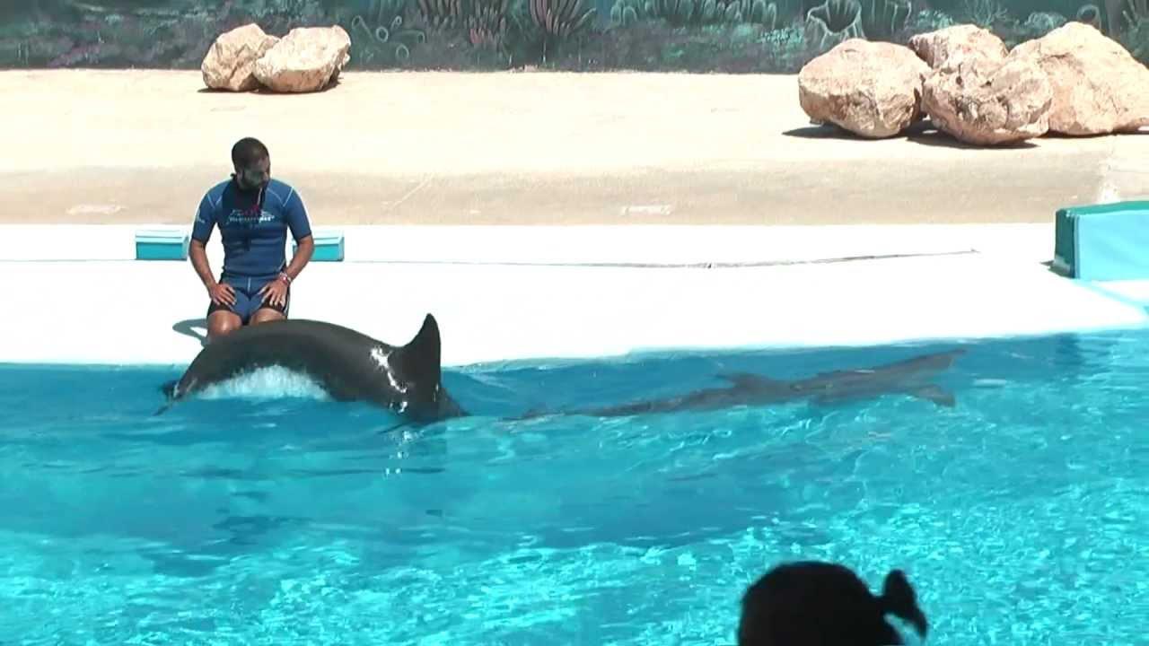 Delfin-testvériség - Szöcske látomás