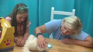 Little Live Pets Kicia Mój wymarzony kotek