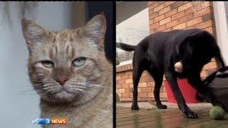 Коту перелили собачью кровь (новости)
