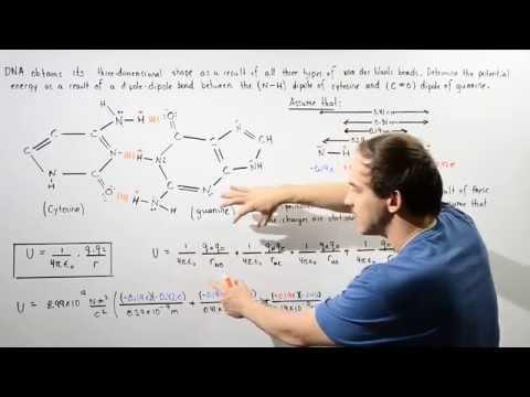 van der Waals Forces in DNA Molecules