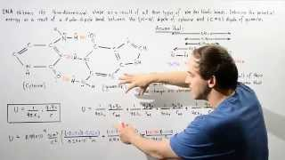 van der Waals Forces in DNA Molecules