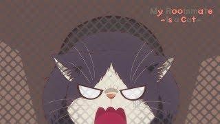 Vétérinaire | My Roommate is a Cat