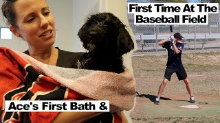 Puppy's First Bath and First Time at the Baseball Field