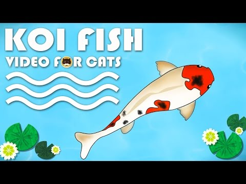 CAT GAMES ON SCREEN – Catching Koi Fish. Entertainment Video for Cats to Watch.