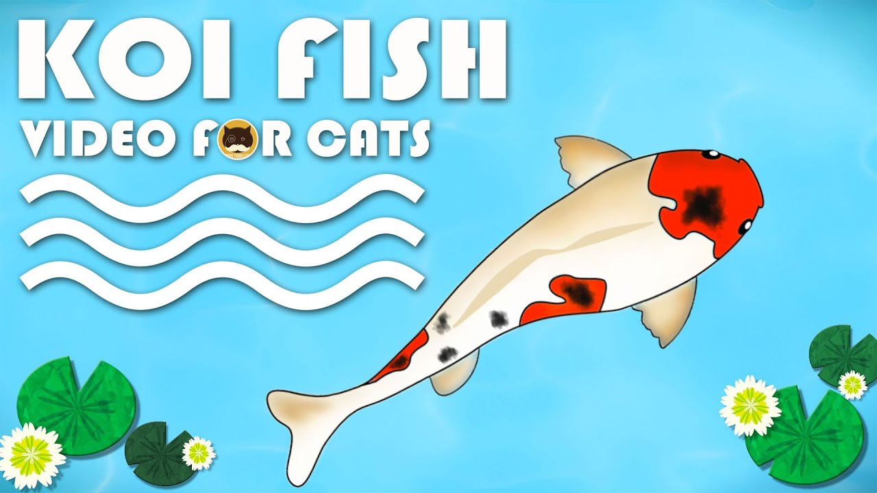 Fish cat game cute cats for Fish cat game