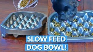 Genius Slow Feeding Dog Tray!