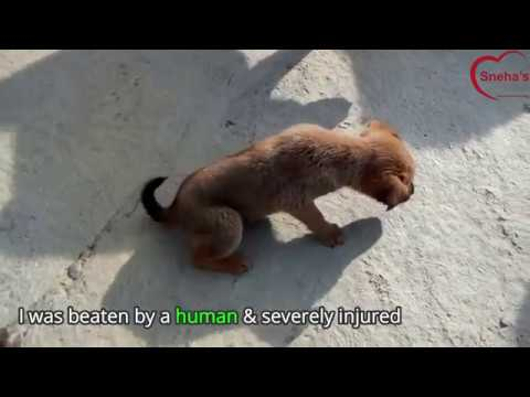 Puppy that was beaten by a cruel person