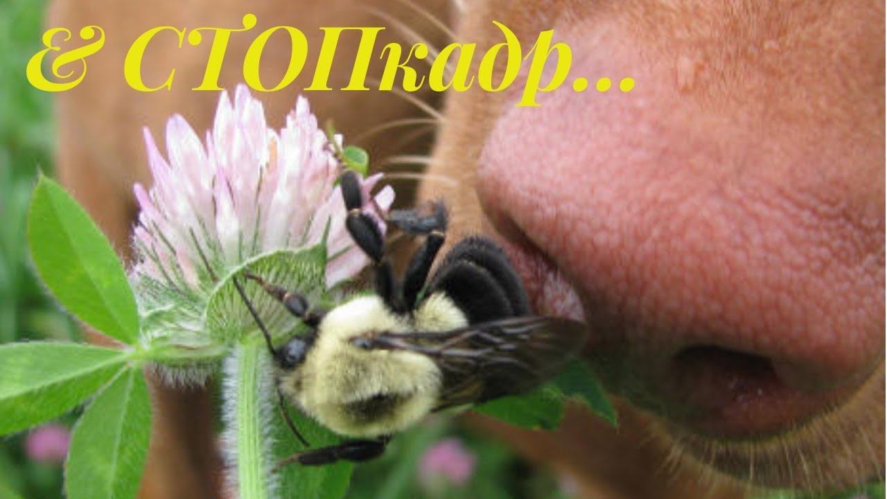 Смешные картинки покусали пчелы