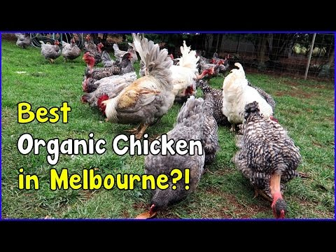 Free Range egg farming and Organic in Australia (May 3, 2016