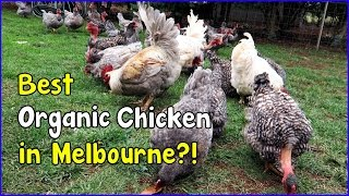 Free Range egg farming and Organic in Australia (May 3, 2016 vlog)