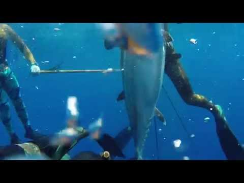 Spearfishing-The Kingdom of Tonga 2014