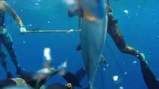 Spearfishing-The Kingdom of Tonga 2014