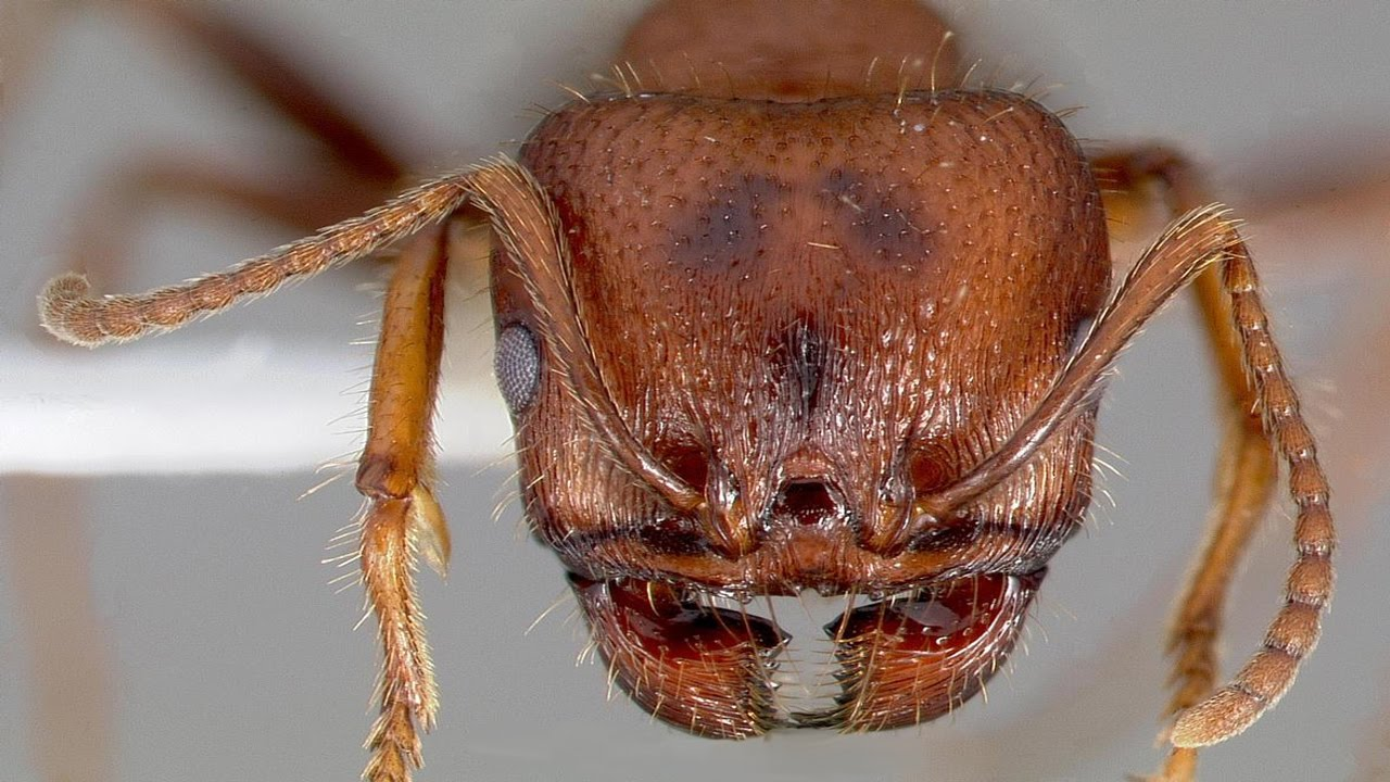 ant under a microscope - photo #30