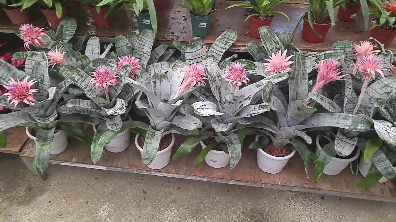 Vários Tipos De Plantas Ornamentais Em Uma Floricultura Sítio Gilsat