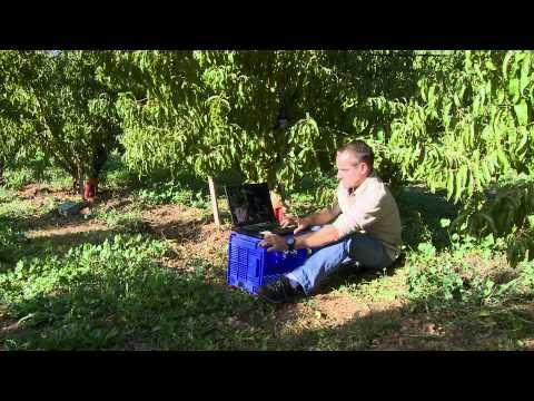 irrigation des vergers projet exp rimental par goutte goutte enterr youtube. Black Bedroom Furniture Sets. Home Design Ideas