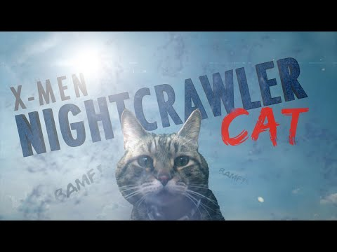 X-Men: Nightcrawler Cat