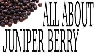 Juniper Berry - Spice Profile by Spiceologist.com