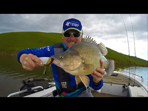 Lake Hume Golden Double Of Yellowbelly