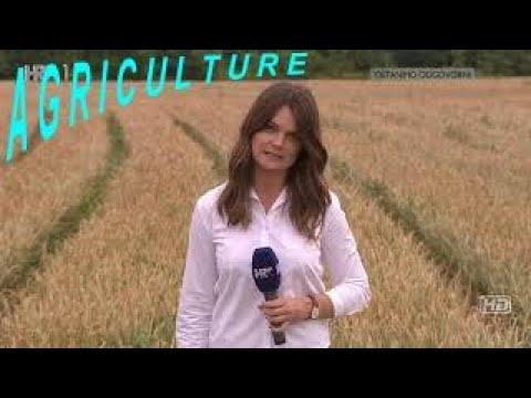 das-leben-in-kroatien-the-life-in-croatia-tv-agriculture-9.8.2020-plodovi-zemlje-9.8.2020