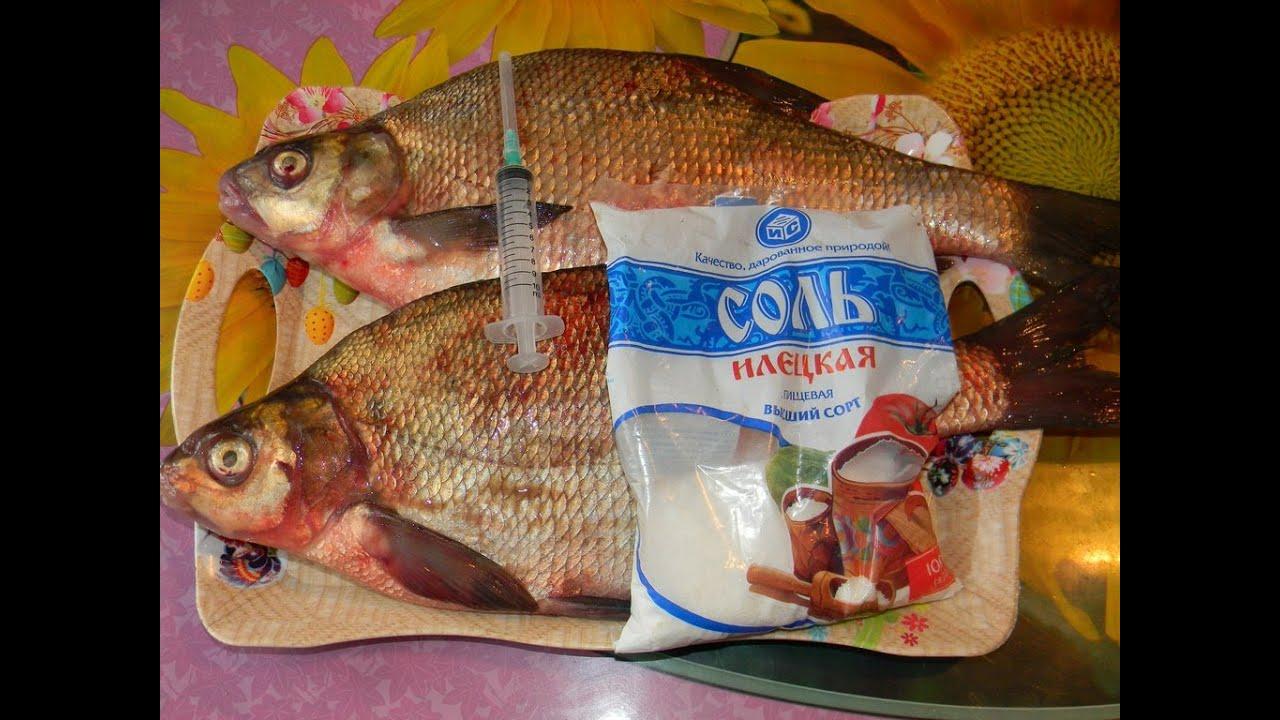 засолка речной рыбы