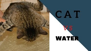 Cats Vs Water 🔴 Funny Cat Videos Compilation