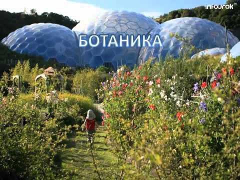 Видеоурок по биологии 6 класс царство растений
