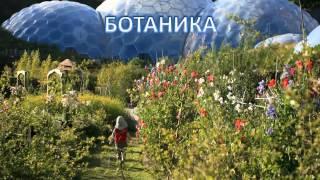 Видеоурок ''Царство растений'' - БИОЛОГИЯ - 6 кл.