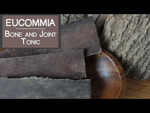 Eucommia Bark, A Tonic Herb for the Bones and Joints