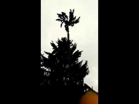 Prächtig Fichte Spitze kappen - YouTube #LK_87