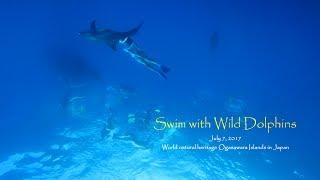 七夕の日は、イルカとデート~DolphinSwim in Ogasawara~