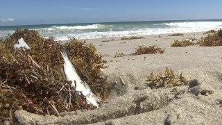 Brevard officials warn of red tide health effects