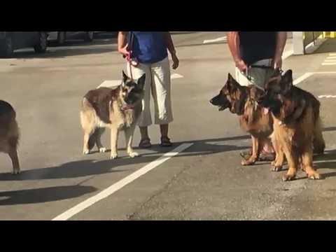 Pet Transport to Spain Uk Animal Pet Courier