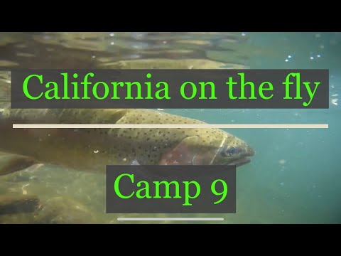 CALIFORNIA ON THE FLY: CAMP NINE ON THE STANISLAUS RIVER
