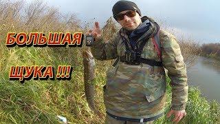 Большая щука. Рыбалка на щуку. Ловля крупной щуки на спиннинг в октябре. Клев рыбы