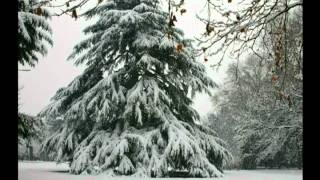 冬の新宿御苑とシューベルトの「冬の旅」 thumbnail
