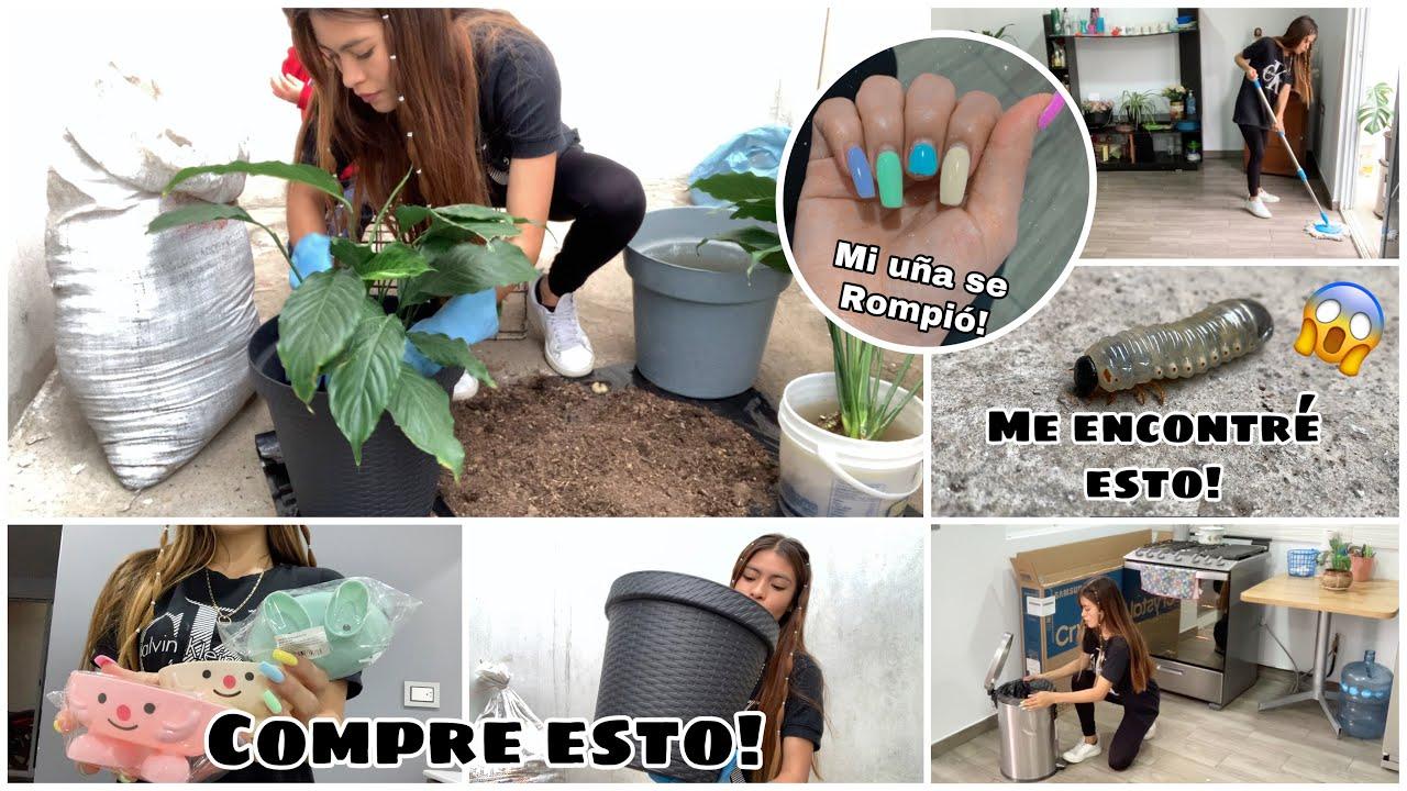 Download LIMPIA CONMIGO + Recuperando mi cuna de Moisés | Ammy Alvarado