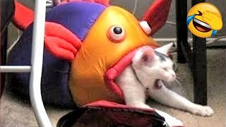 Cute Animals Doing Funny Things 🤣 -  Funny Cats 😹 And Dogs 🐶  Reactions