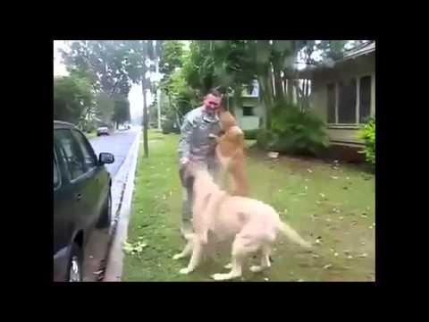 Как радуются собаки хозяину