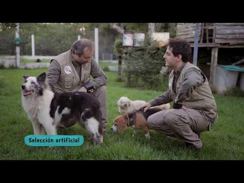 Paleodetectives - La evolución en Uruguay - Ep 02 -  ¿Son los perros lobos?
