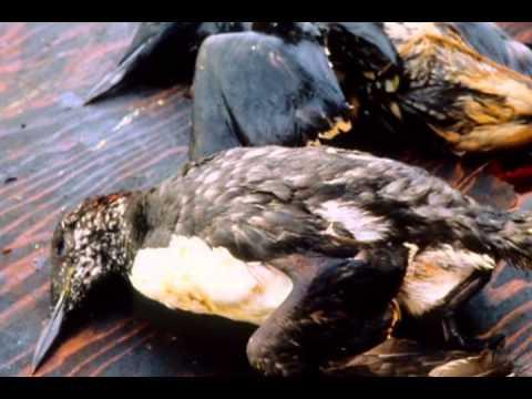 Alberta Tar Sands Documentary