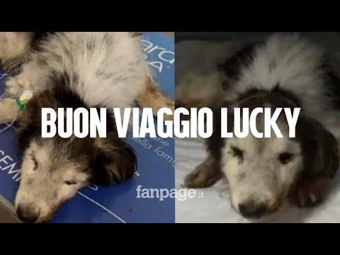 """Morto Lucky, il cane anziano e malato gettato nella spazzatura: """"Abbiamo il cuore spezzato"""""""