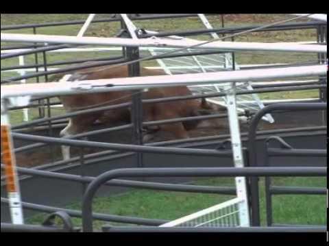 Priefert Bull Walker