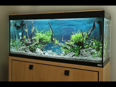 How to Aquascape a Fluval 240 Roma Nature Aquarium Planted Tank