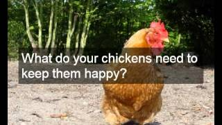 Where To Buy Second Hand Chicken Coops | Buy Second Hand Chicken Coops Online | Safe Site | Cheap