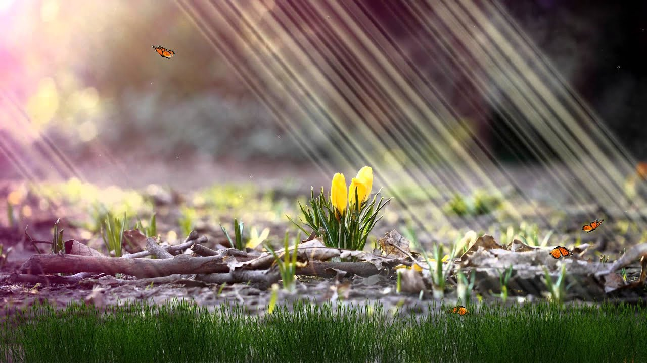 flower dawn animated wallpaper http://www.desktopanimated - youtube