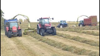 Fell Silage - Lifting Grass in the Fells with 2 Claas Trailed Foragers with NHs , Case & MF