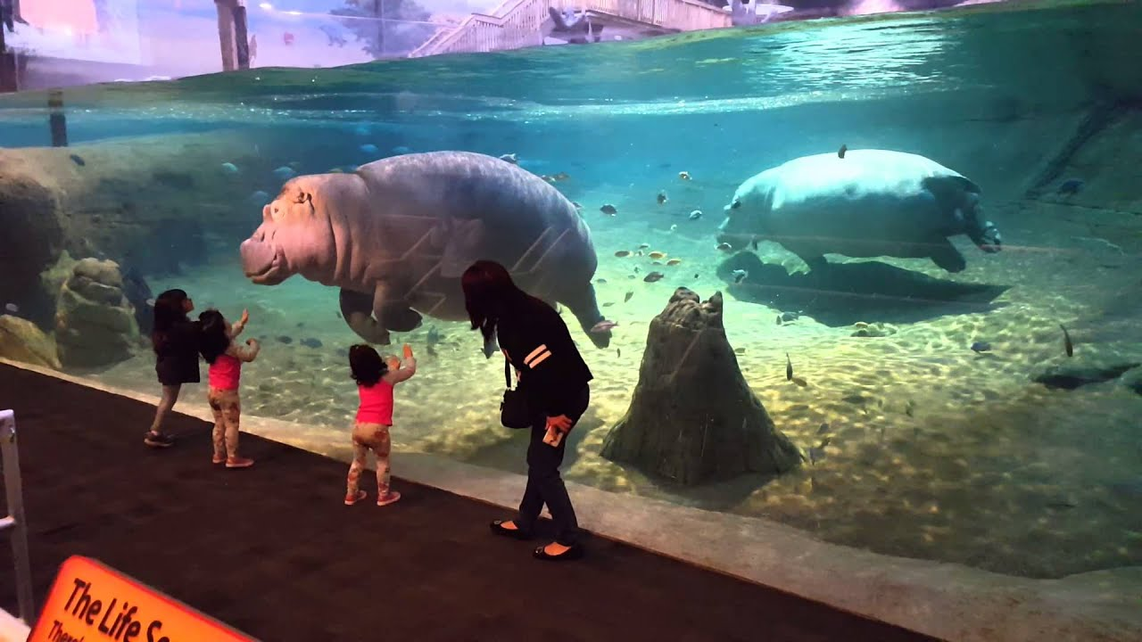Adventure Aquarium Camden NJ